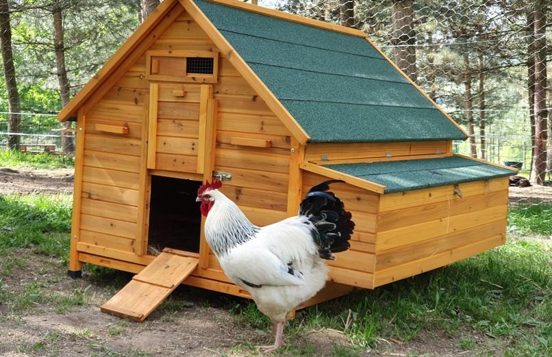 Poulailler Bassette XXL toit vert avec poule